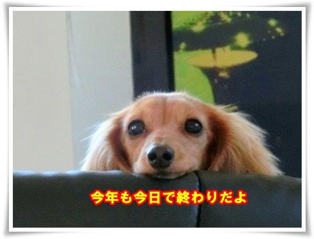 1_20131231103004ddc.jpg