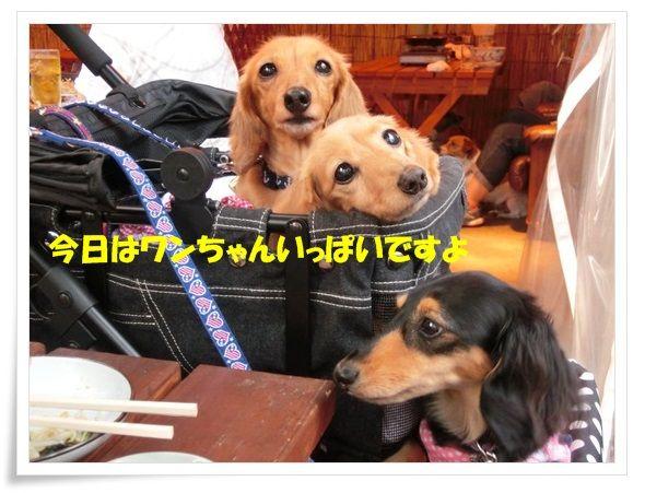 4_20130630091050.jpg