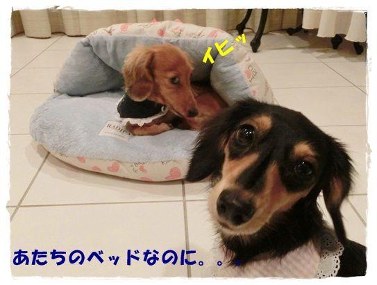 CIMG4917-20121019.jpg