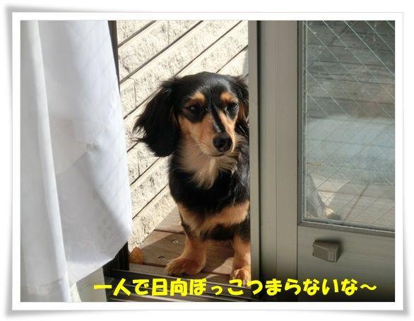 CIMG4694-20130508.jpg