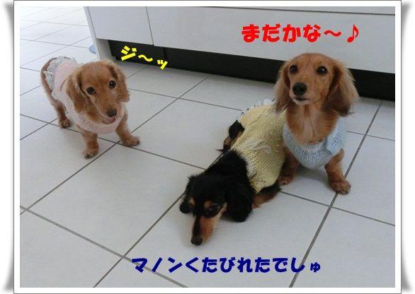 CIMG9468-20130118.jpg