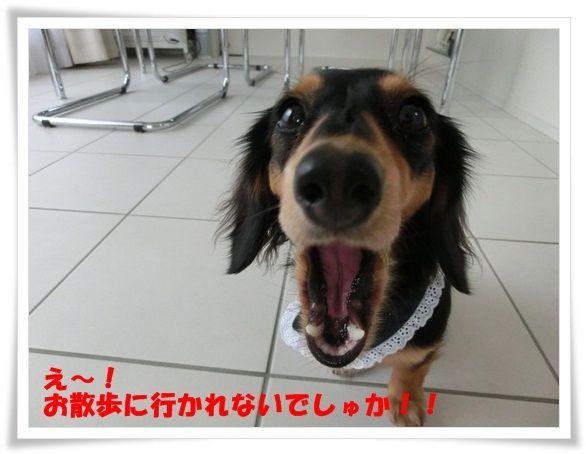CIMG6929-20121130.jpg