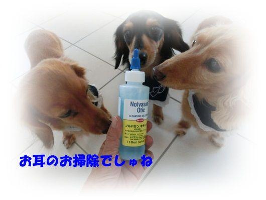 CIMG8036-20121210.jpg