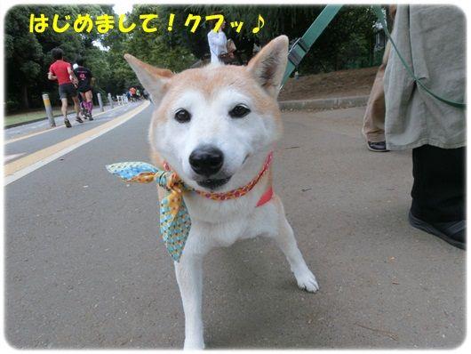 CIMG4594-20121015.jpg