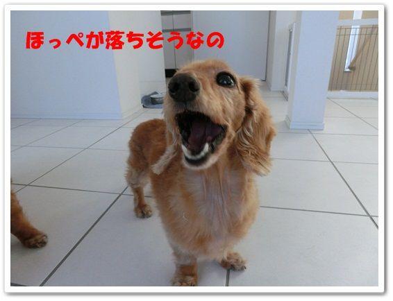 CIMG0524-20130208.jpg