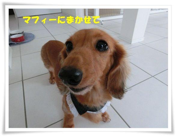 CIMG6907-20121130.jpg