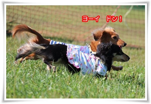 18_2015092621322415c.jpg