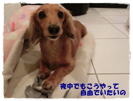 CIMG4-20130314.jpg