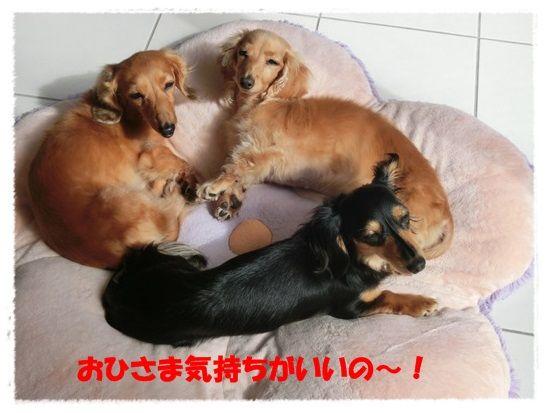 1_20130622101141.jpg