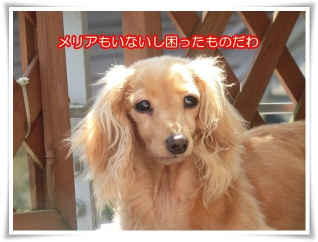 6_201404262034494d3.jpg