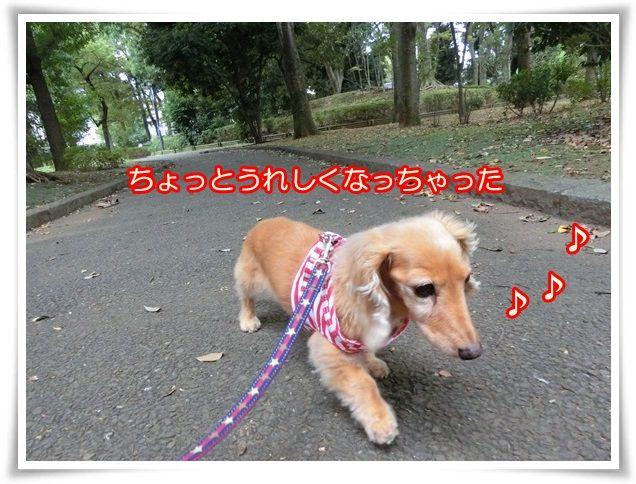 13_20141012081424fb2.jpg