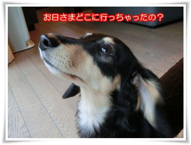 6_20140818101422e7d.jpg