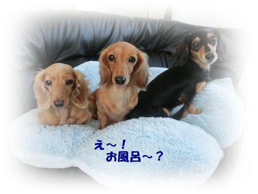 CIMG4613-20121016.jpg