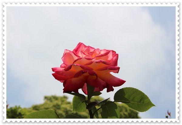 IMG_6961-20130522.jpg