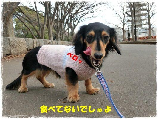 CIMG9717-20130123.jpg