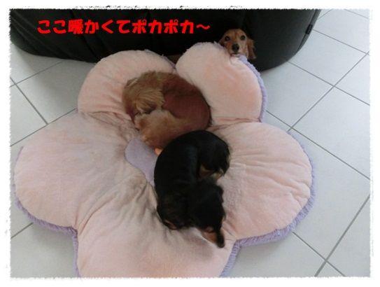 CIMG3-20121119.jpg