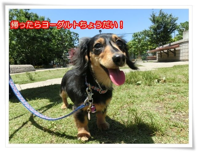 7_20140518083114c1d.jpg