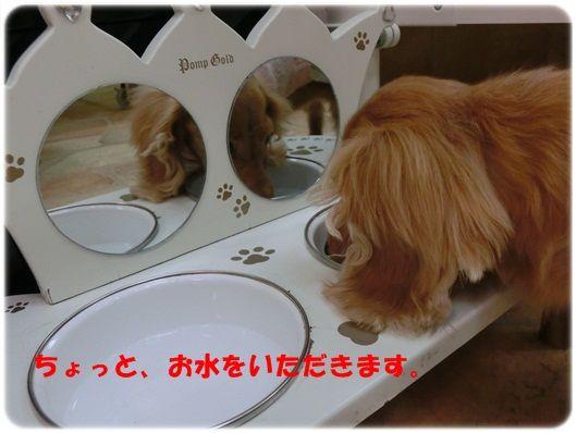 CIMG5799-20121112.jpg