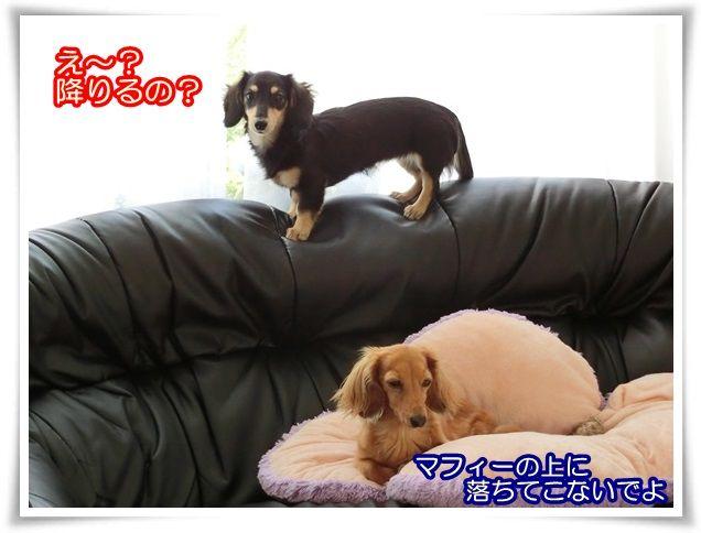 5_201407170859209df.jpg