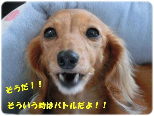CIMG5-20130116.jpg