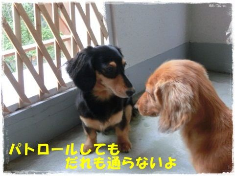 CIMG1102_20120817135054.jpg