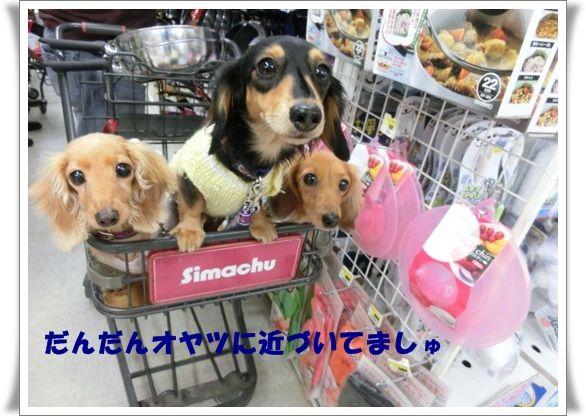 CIMG6143-20121118.jpg