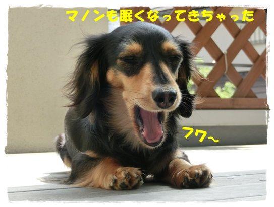 CIMG7-20130416.jpg
