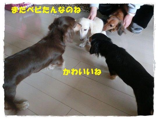 CIMG7152-20121202.jpg