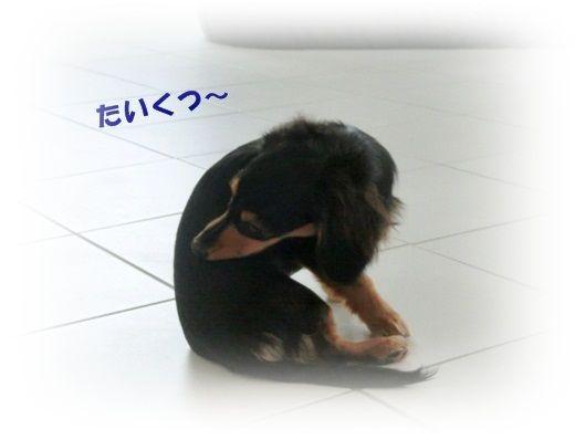 CIMG4783-20121018.jpg