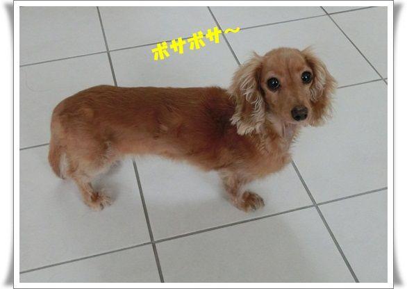 CIMG8289-20121223.jpg