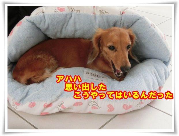 8_2013102712102386d.jpg
