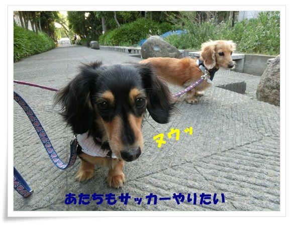 CIMG4845-20130510.jpg
