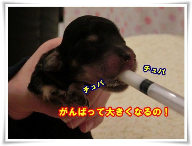4_201312271043217be.jpg