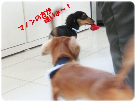 CIMG5908-20121113.jpg