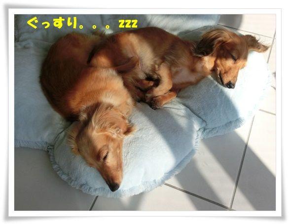 CIMG4696-20130508.jpg