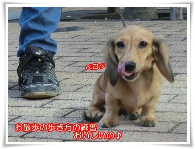 11_20140930105349a2f.jpg