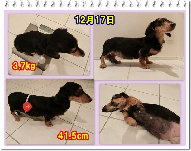 12_20131218094159cea.jpg