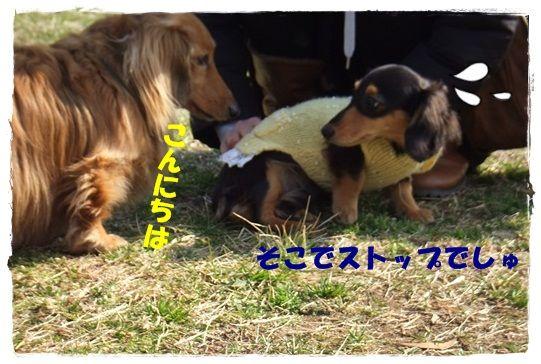DSCF9257-20121221.jpg