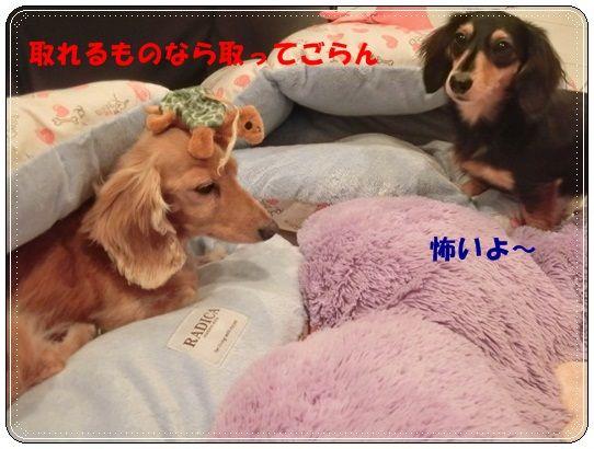 CIMG5226-20121021.jpg