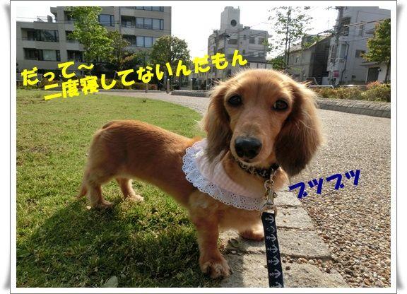 CIMG4986-20130514.jpg