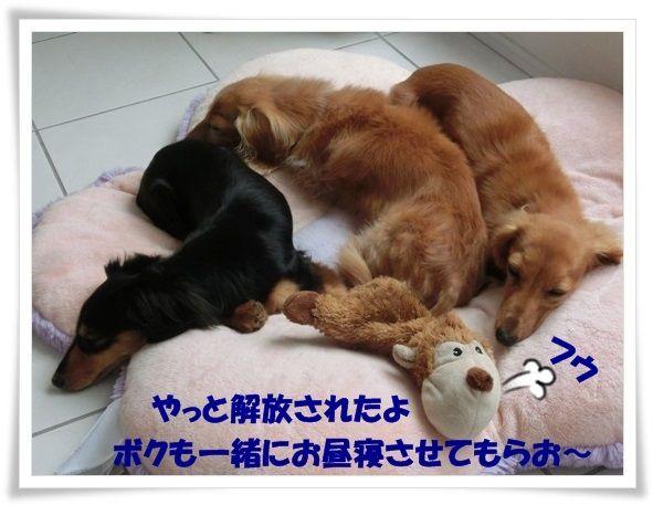 10_20130627130604.jpg