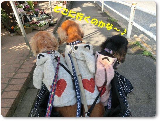 CIMG6823-20121124.jpg