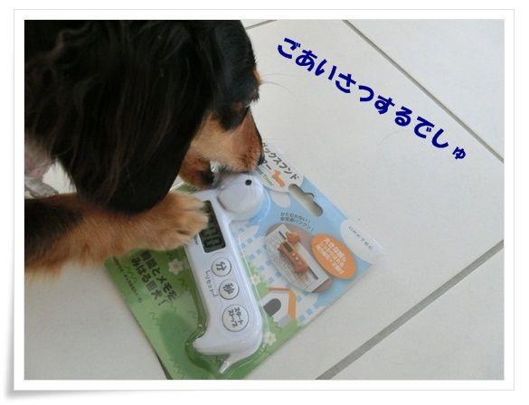 CIMG1-20121022.jpg