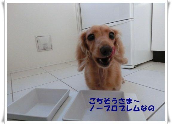 CIMG4464-20121013.jpg