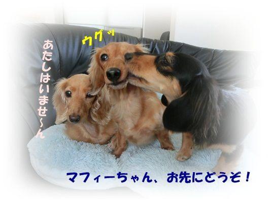 CIMG4616-20121016.jpg