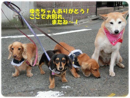 CIMG4603-20121015.jpg