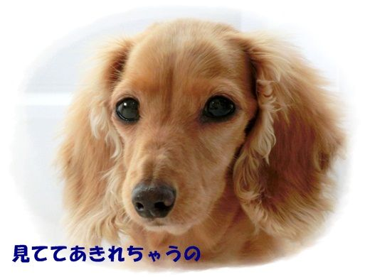 CIMG3214.jpg