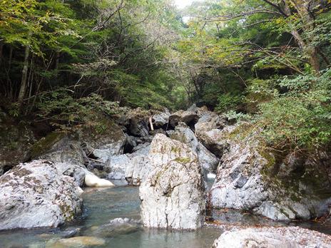實施和歌山市民的森的建設、起源經驗學習會(10/13)