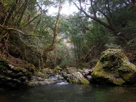 今日の水源地の森(2月21日)