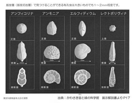 飯室層有孔虫化石顕微鏡画像(展示解説書より)